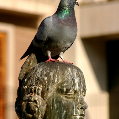 Pigeon resting in the Plaza Virgen